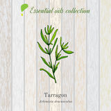 Tarragon, essential oil label, aromatic plant Royalty Free Stock Photography