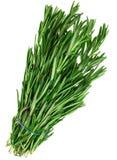 Tarragon herb Stock Photo