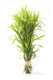 Tarragon herb bunch. Fresh tarragon herb bunch isolated on white background Royalty Free Stock Photos