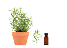 Tarragon Herb Essential Oil Royalty Free Stock Images