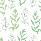Tarragon herb graphic green sketch seamless pattern background illustration vector Royalty Free Stock Photography