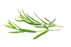 Tarragon herbs close up isolated on white Royalty Free Stock Image