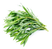 Tarragon herbs Royalty Free Stock Images