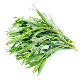 Tarragon herbs Royalty Free Stock Image