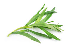 Tarragon herbs Stock Photo