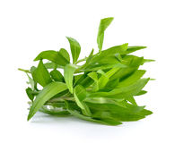 Tarragon herbs on white background Royalty Free Stock Images