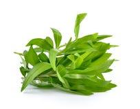 Tarragon herbs on white background. Tarragon herbs on a white background royalty free stock images