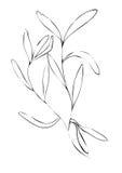 Tarragon illustration on white background Stock Image