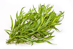 Tarragon leaves. A closeup view of the Tarragon(herb) leaves, isolated on a white background stock photo