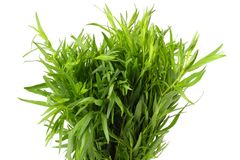 Tarragon leaves Royalty Free Stock Images
