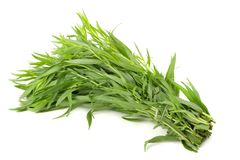 Tarragon leaves Royalty Free Stock Image