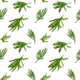 Tarragon pattern Stock Images