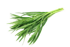 Tarragon sprig of green Royalty Free Stock Images