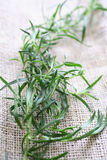 Tarragon on tablecloth Stock Photography