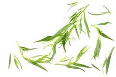 Tarragon. Artemisia dracunculus Isolated on white background royalty free stock image