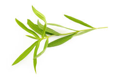 Tarragon. Twig fragment isolated on white background stock photo