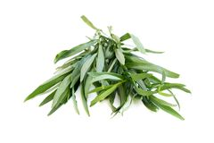 Tarragon. On a white background royalty free stock images