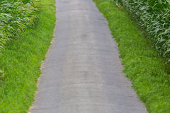 Tarred agricultural path within fields of sweet corn plants Stock Photos