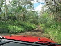 Tarred road through lush woodland Royalty Free Stock Images
