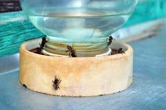 tarro de agua con las abejas Fotografía de archivo libre de regalías