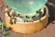 Tarro de agua con las abejas en él Foto de archivo libre de regalías