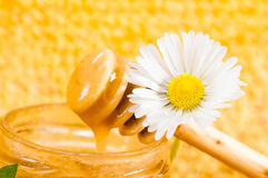 Tarro de miel en el fondo de panales Imágenes de archivo libres de regalías