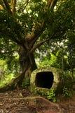 Tarro de piedra con un árbol ramificado enorme Imagen de archivo