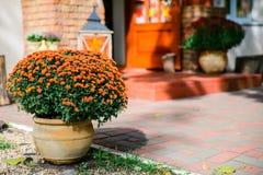Tarro de soportes de flores del otoño afuera Fotografía de archivo libre de regalías