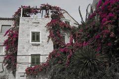 Tarro en jardín Fotografía de archivo libre de regalías