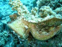 Tarro romano encrusted coral fotografía de archivo libre de regalías