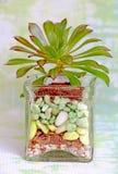 Tarro y succulent antes de plantar fotos de archivo