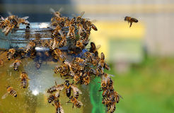 Tarros de miel con las abejas en ella Fotografía de archivo libre de regalías