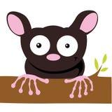 Tarsier. Brown tarsier on white background stock illustration