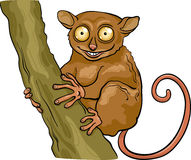 Tarsier animal cartoon illustration Royalty Free Stock Photography