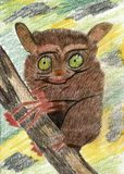 Tarsier on a Branch - Color Pencil Drawing. This is a hand drawn color pencil drawing. The illustration shows a lovely tarsier on a branch. The background is vector illustration