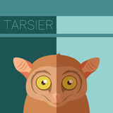 Tarsier flat postcard Stock Photos