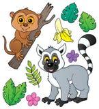 Tarsier and lemur theme set 1. Eps10 vector illustration royalty free illustration