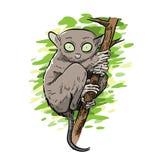 Tarsier Monkey Vector Illustration. A hand drawn vector illustration of a rare tarsier monkey royalty free illustration