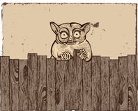 Tarsier with wooden fence. Big eyes tarsier with wooden fence stock illustration