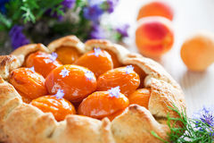 Tart with apricots Royalty Free Stock Photography