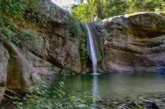Tartagal cai na floresta de Yungas Foto de Stock Royalty Free