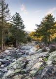Tartagine flod i den Balagne regionen av Korsika Royaltyfri Fotografi