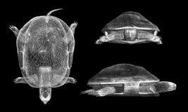 A tartaruga Ilustração do Vetor