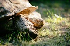 Tartaruga all'aperto Fotografia Stock Libera da Diritti