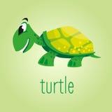 Tartaruga bonita dos desenhos animados Ilustração do vetor Fotos de Stock Royalty Free