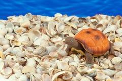 Tartaruga-brinquedo Fotos de Stock Royalty Free