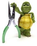 Tartaruga com alicates Imagens de Stock Royalty Free