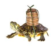 Tartaruga con soldi Fotografia Stock Libera da Diritti