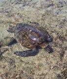 Tartaruga d'alimentazione immagini stock libere da diritti