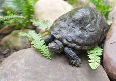 Tartaruga da água em uma pedra Fotografia de Stock
